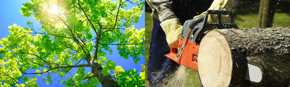 Tree Services Seattle